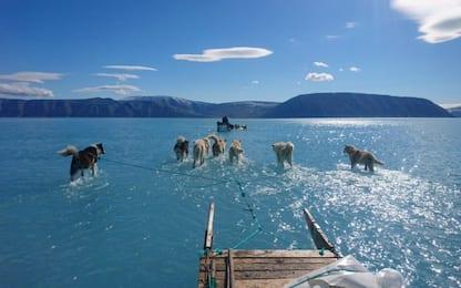 Groenlandia, slitta trainata sull'acqua: la foto è diventata virale