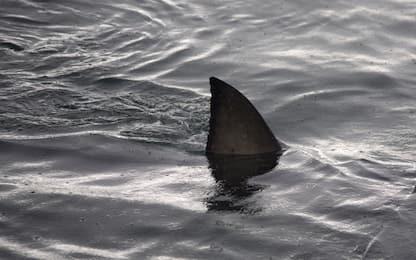 Australia, 17enne ucciso da uno squalo mentre faceva surf