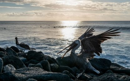 Allarme alle Galapagos, pescherecci cinesi vicino a riserva naturale