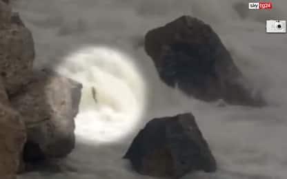 Canada, frana nel fiume: salmoni trasportati in elicottero. VIDEO