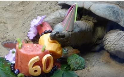 Pennsylvania, torta di compleanno per la tartaruga che compie 60 anni