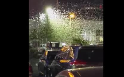 Las Vegas invasa dalle cavallette, strade ricoperte da insetti. VIDEO