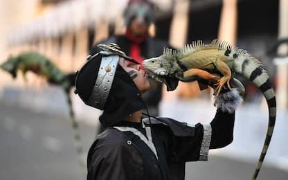 Indonesia, animali e padroni travestiti per il carnevale