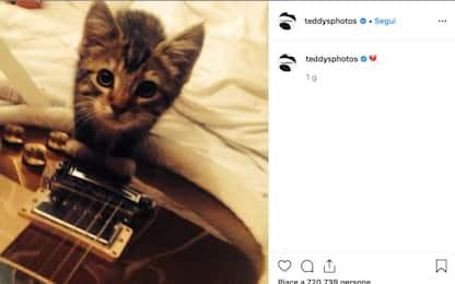Ed Sheeran, un post su Instagram per la morte del gatto Graham