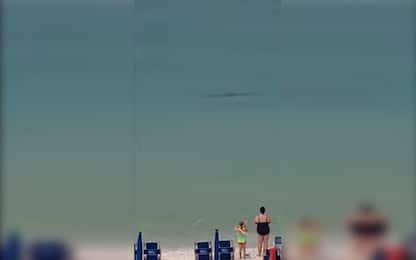 Squalo martello a pochi metri dalla riva in Florida. VIDEO