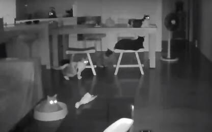Terremoto a Taiwan, che paura per i gatti: risveglio da incubo. VIDEO