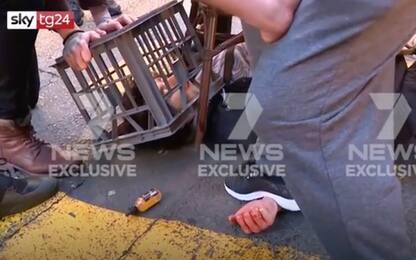 Australia, accoltella donna a Sydney, passanti lo bloccano. VIDEO