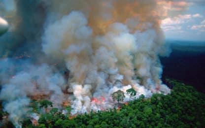 Incendi Amazzonia: l'appello social delle star