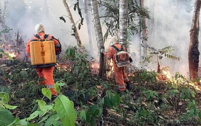Brasile, Amazzonia in fiamme: incendi in aumento in tutto il Paese