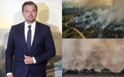 Incendi in Amazzonia, Leonardo DiCaprio dona 5 milioni di dollari