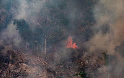 Amazzonia, crescita vertiginosa della deforestazione nel 2019