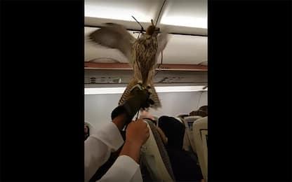 Un falco dentro un aereo spiega le ali al momento del decollo. VIDEO