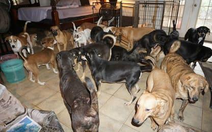 Bahamas, donna accoglie 97 cani in casa per salvarli da Dorian