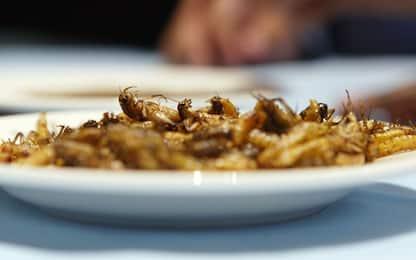 In Sudafrica apre il primo ristorante che serve solo insetti. VIDEO