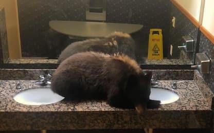 Ospite inatteso in un hotel del Montana: c'è un orso nel bagno. VIDEO