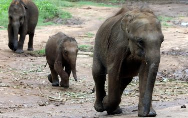 hero-elefanti-orfani-sri-lanka