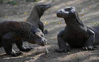 Indonesia lascia aperta ai turisti l'isola di Komodo