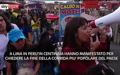 Perù, proteste contro la più importante corrida del Paese. VIDEO