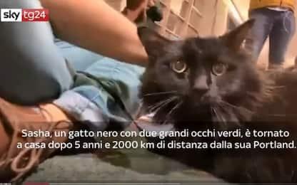 Oregon, gatto ritrovato dopo 5 anni e a 2mila km di distanza. VIDEO