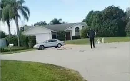 Florida, un cane alla guida dell'auto del suo padrone. VIDEO