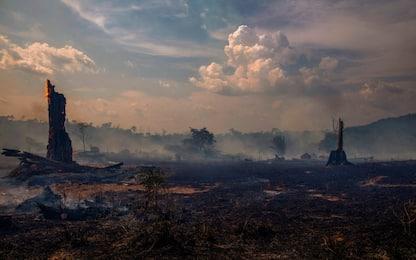 Amazzonia, arrestati 4 volontari Ong accusati di appiccare incendi