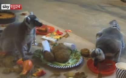 Chicago, anche i lemuri festeggiano il Thanksgiving day. VIDEO