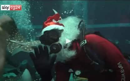 Brasile, Babbo Natale tra gli squali dell'acquario di Rio. VIDEO