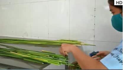 Cannucce eco-sostenibili in arrivo dal Vietnam. VIDEO