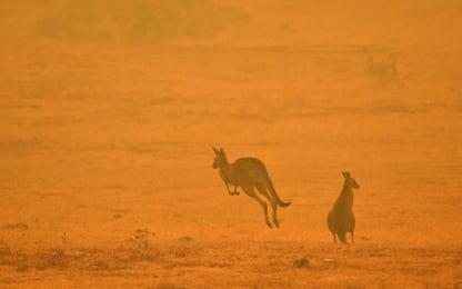Incendi Australia, Università Sydney: morti circa 480 mln di animali