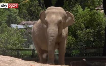 Il viaggio dell'elefante Mara dall'Argentina a uno zoo del Brasile