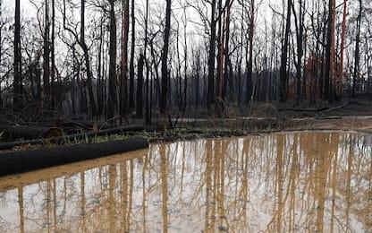 Incendi Australia: cadono forti piogge ma ancora tanti i roghi accesi