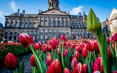 0LaPresse_paesi_bassi_inizio_stagione_tulipani