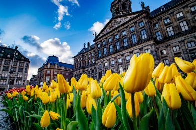 Olanda, agevolazioni fiscali per le multinazionali estere. VIDEO