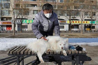 """Coronavirus, a Hong Kong trovato un cane """"lievemente positivo"""""""