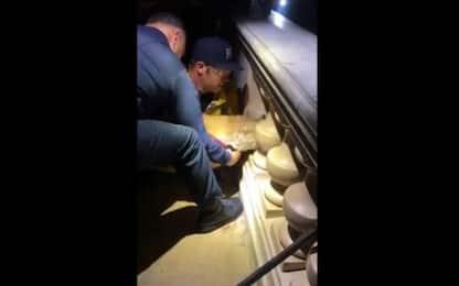 California, cane si incastra tra colonne: liberato da pompieri. VIDEO