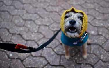 cani-mostra-GettyImages-foto_herO__1_