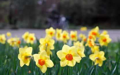 La primavera fiorisce in tutto il mondo. FOTO