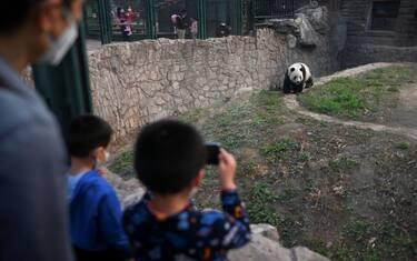 panda_hero_ok