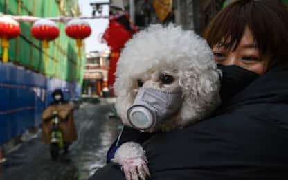 Coronavirus, i padroni proteggono i cani con le mascherine