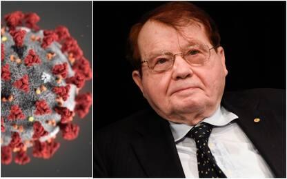 Coronavirus, la contestata tesi Montagnier: viene da laboratorio Wuhan