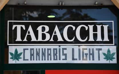 Cannabis, il Riesame di Genova: no sequestri se Thc meno 0,5%