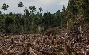 Getty_Images_Deforestazione