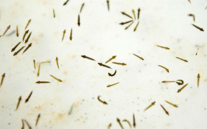Regno Unito, primo fallimento per un farmaco contro la malaria