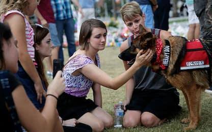 Pet-therapy, porta sollievo ma anche superbatteri