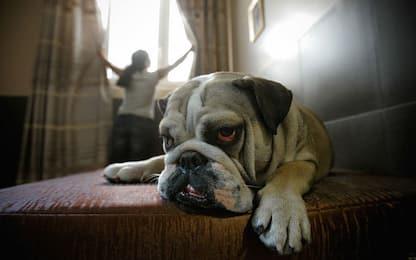 Il fumo uccide cani e gatti: 28% dei proprietari disposto a smettere