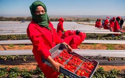I cibi più contaminati dai pesticidi
