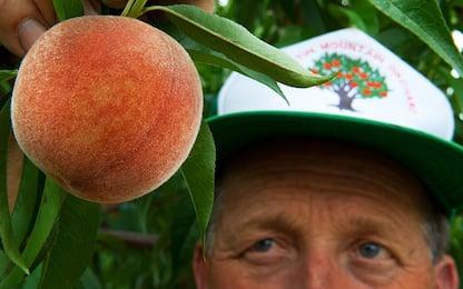 """Coldiretti: """"In 20 anni è sparita una pianta da frutto su quattro"""""""