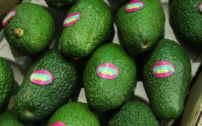 L'avocado come sostituto dei carboidrati: può ridurre la fame