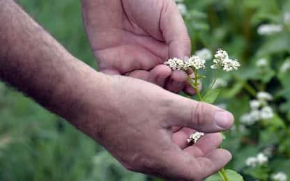 Ottenute piante transgeniche in grado di aumentare la resa del 40%