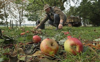 """Le mele """"antiche"""" sono meno belle ma più nutrienti"""